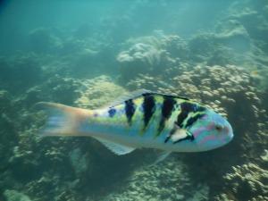 パラオの魚