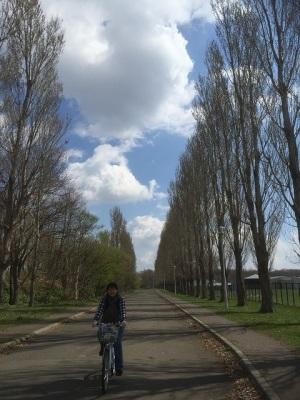 ポプラ並木道