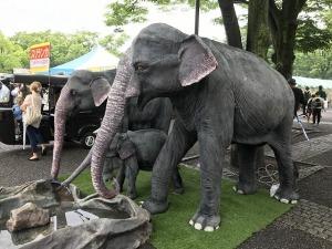 スリランカフェス